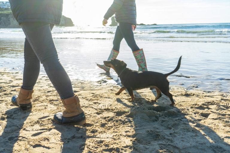 Perranporth, dog friendly beach Cornwall