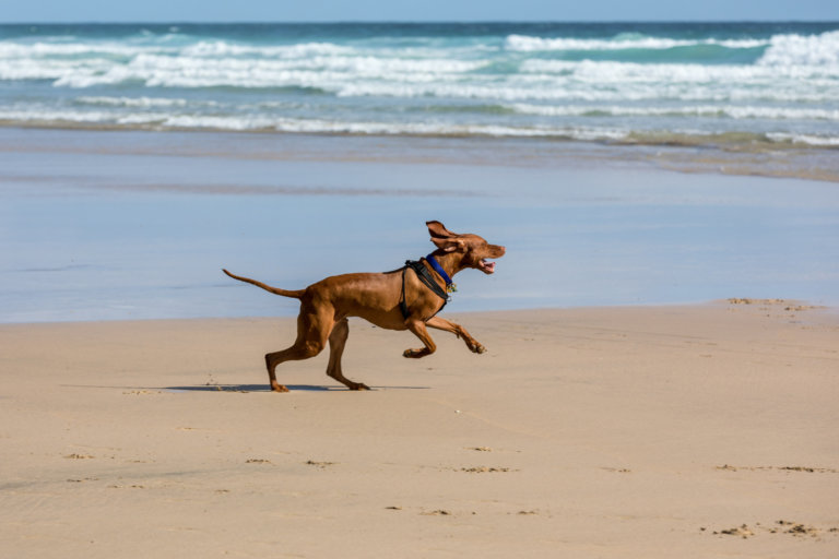 Dog friendly cottages in Perranporth